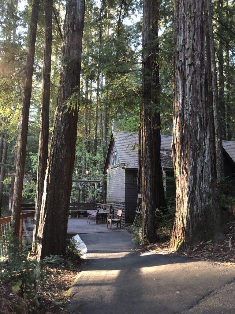 redwoods Daoist retreat